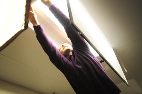 Bear removes the bulbs