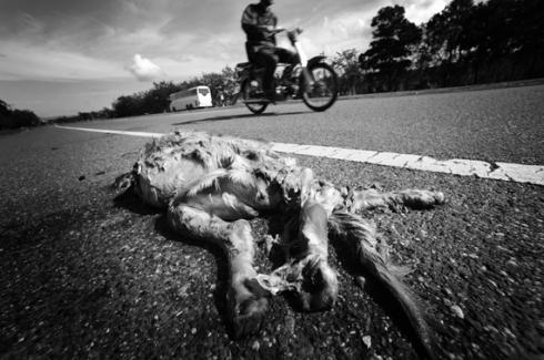 Dominican Highway...